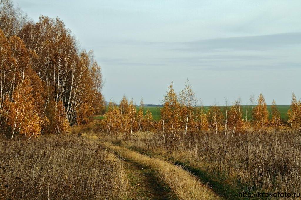 осенние пейзажи 15
