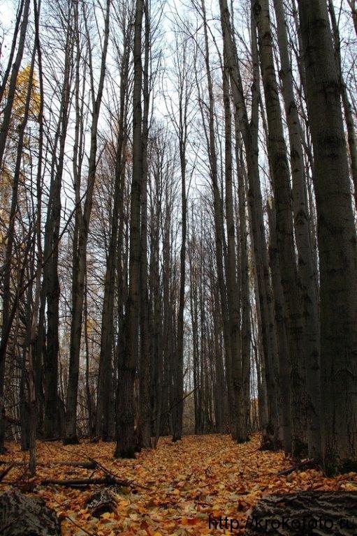 осенние пейзажи 16