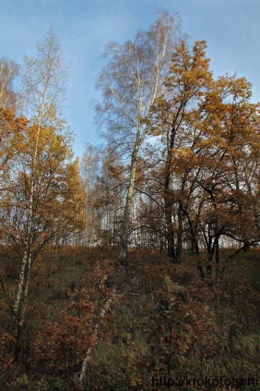 осенние пейзажи 19