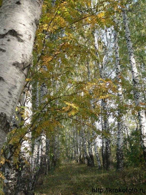 осенние пейзажи 24