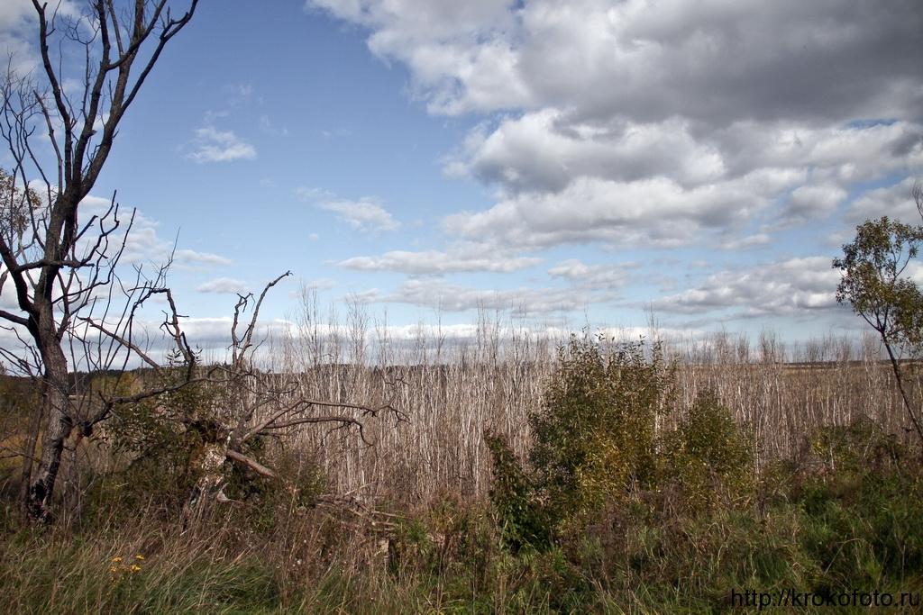 осенние пейзажи 35