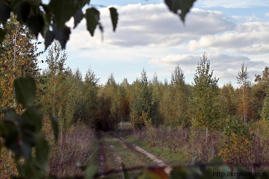 осенние пейзажи 44