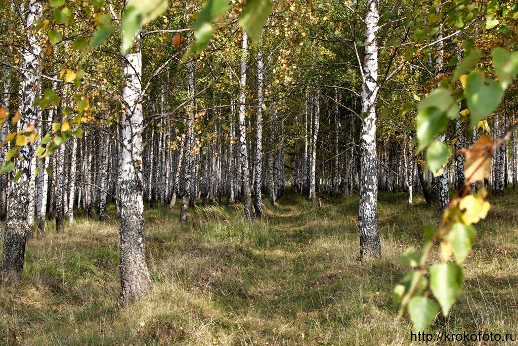 осенние пейзажи 46