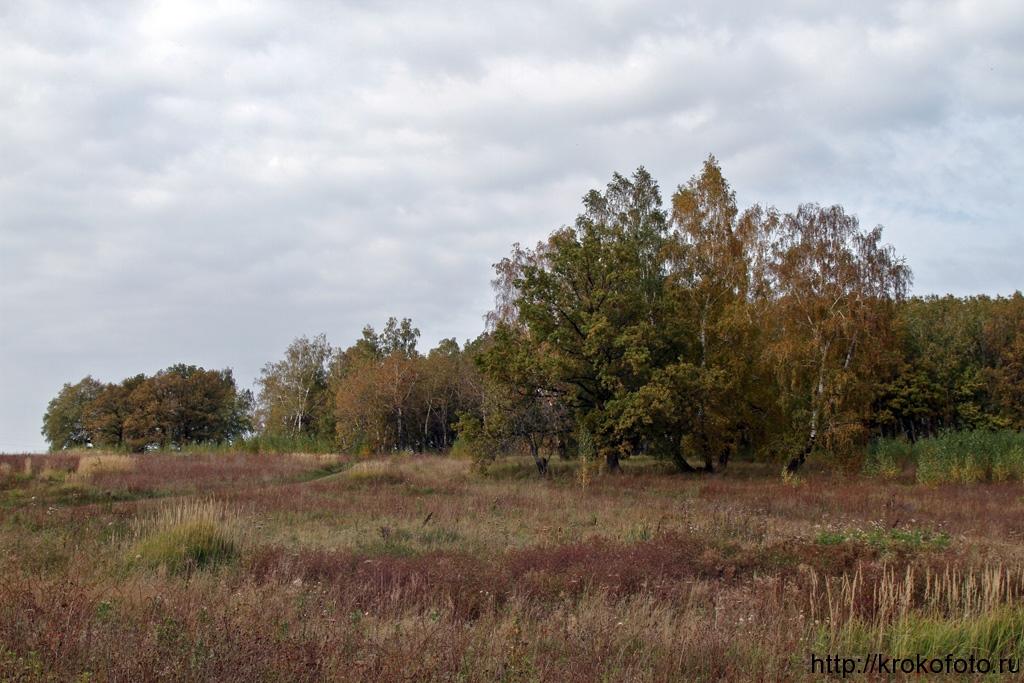 осенние пейзажи 48