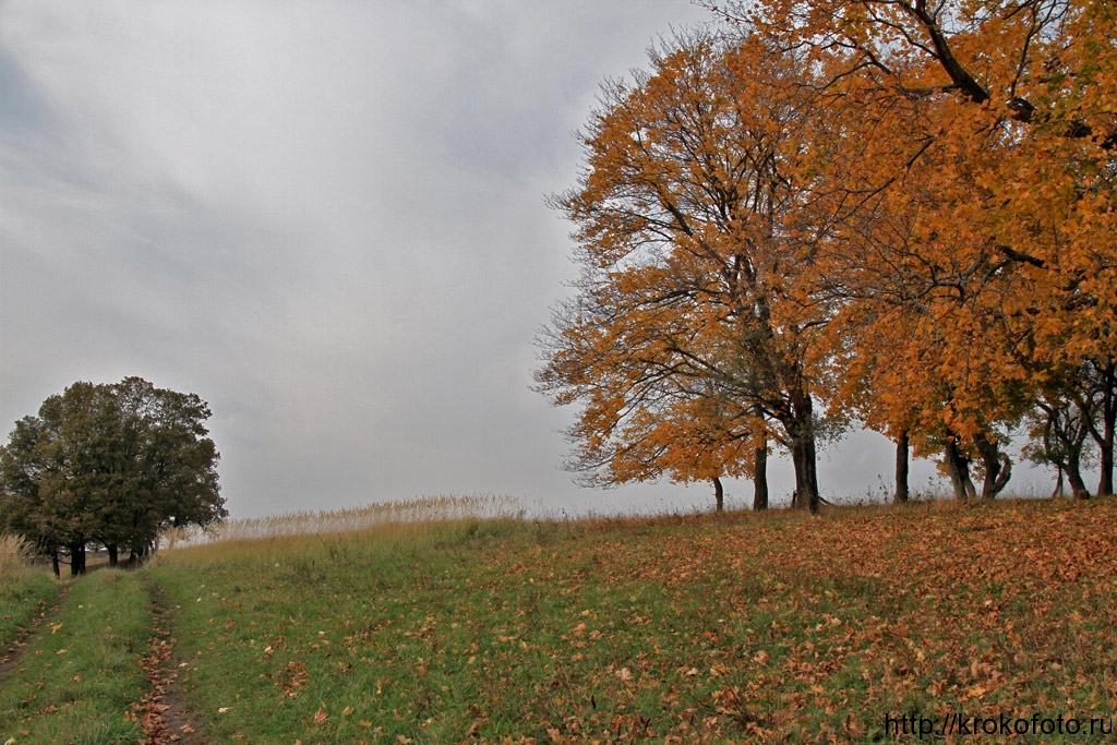 осенние пейзажи 50