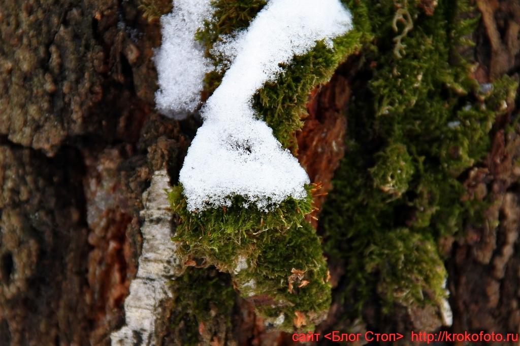 природа 22