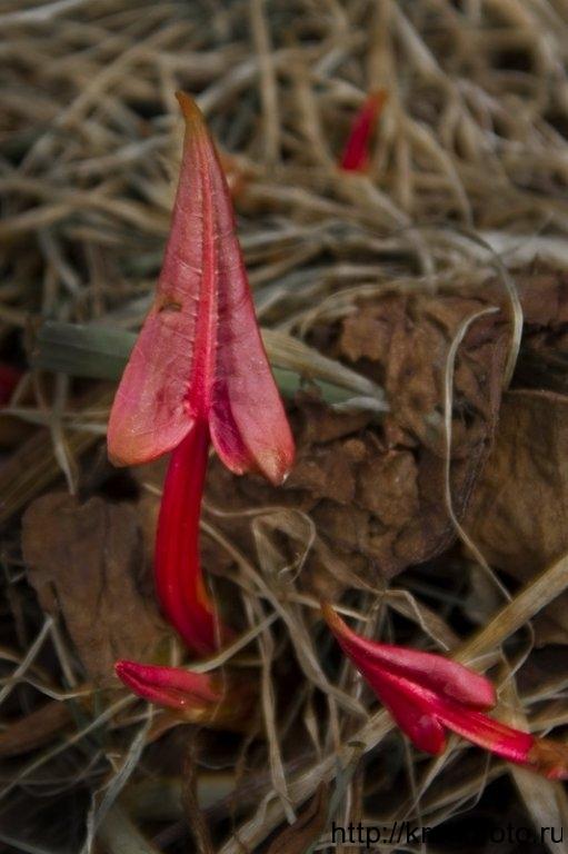 растения 6