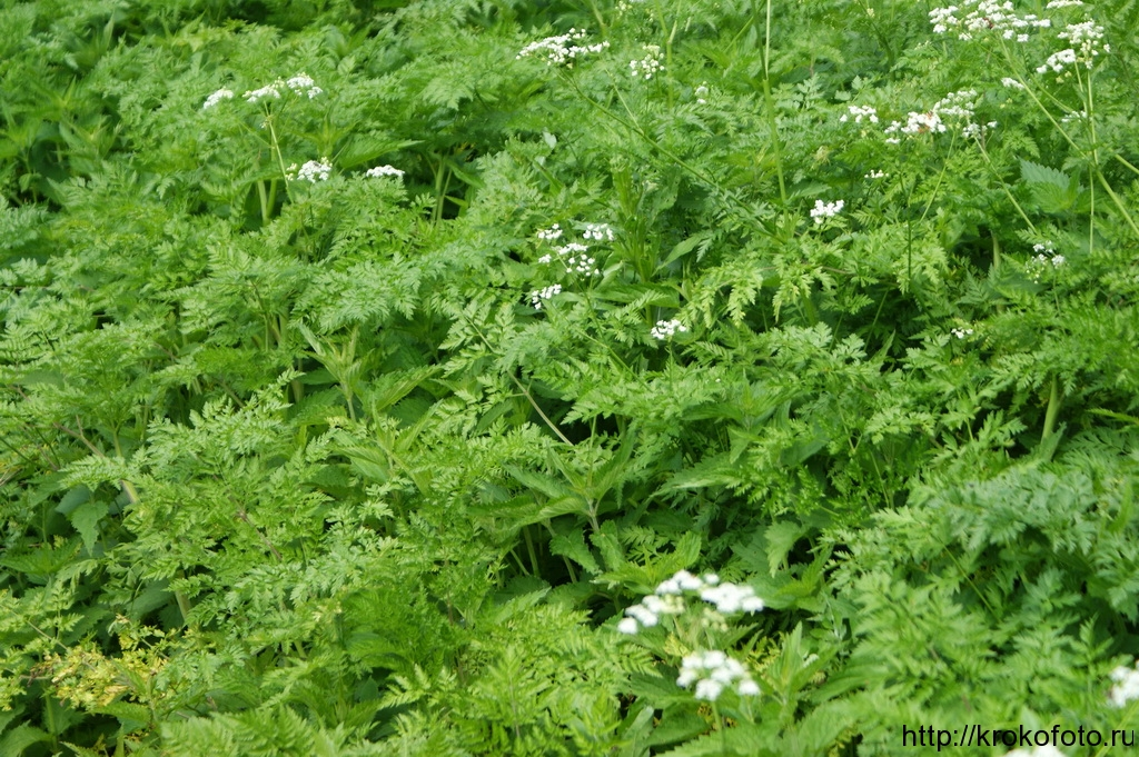 растения 7
