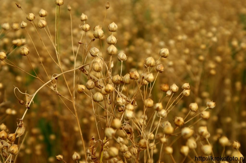 растения 12