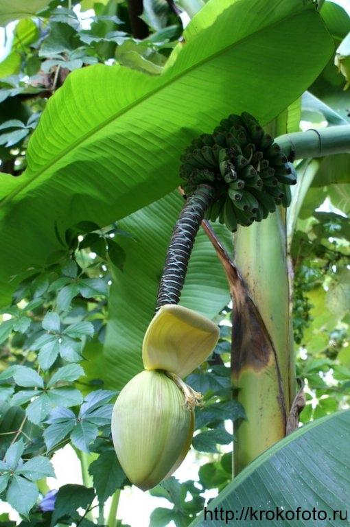 растения 16