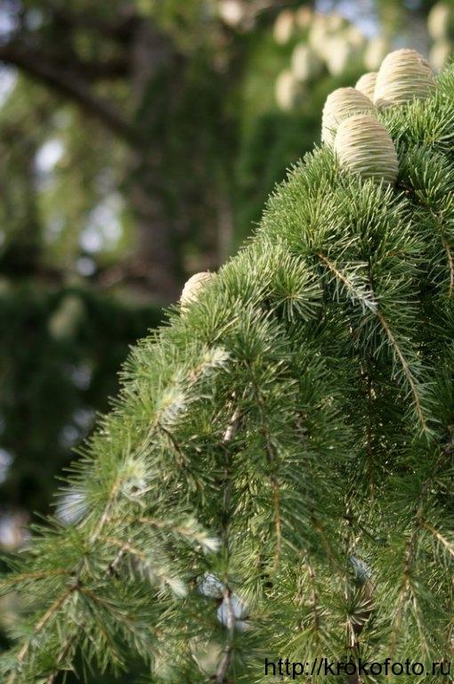 растения 24