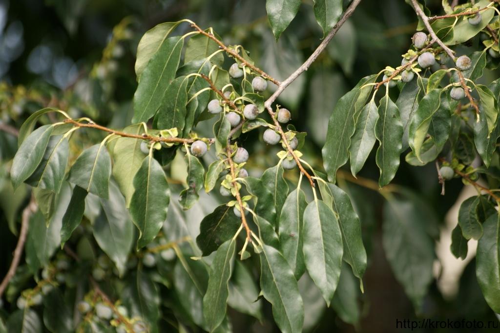 растения 26