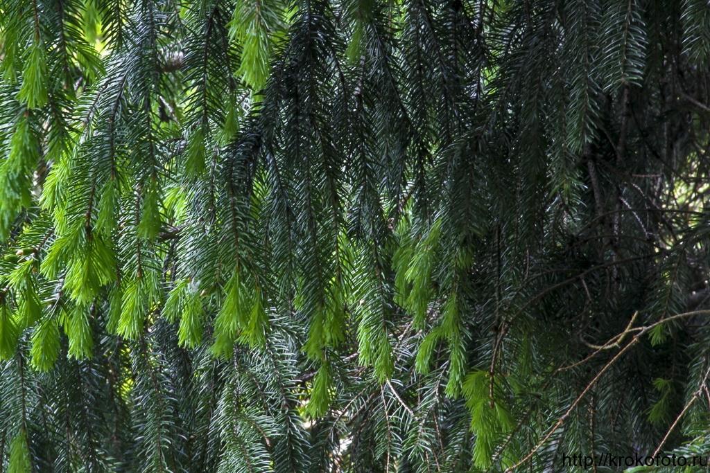 растения 33
