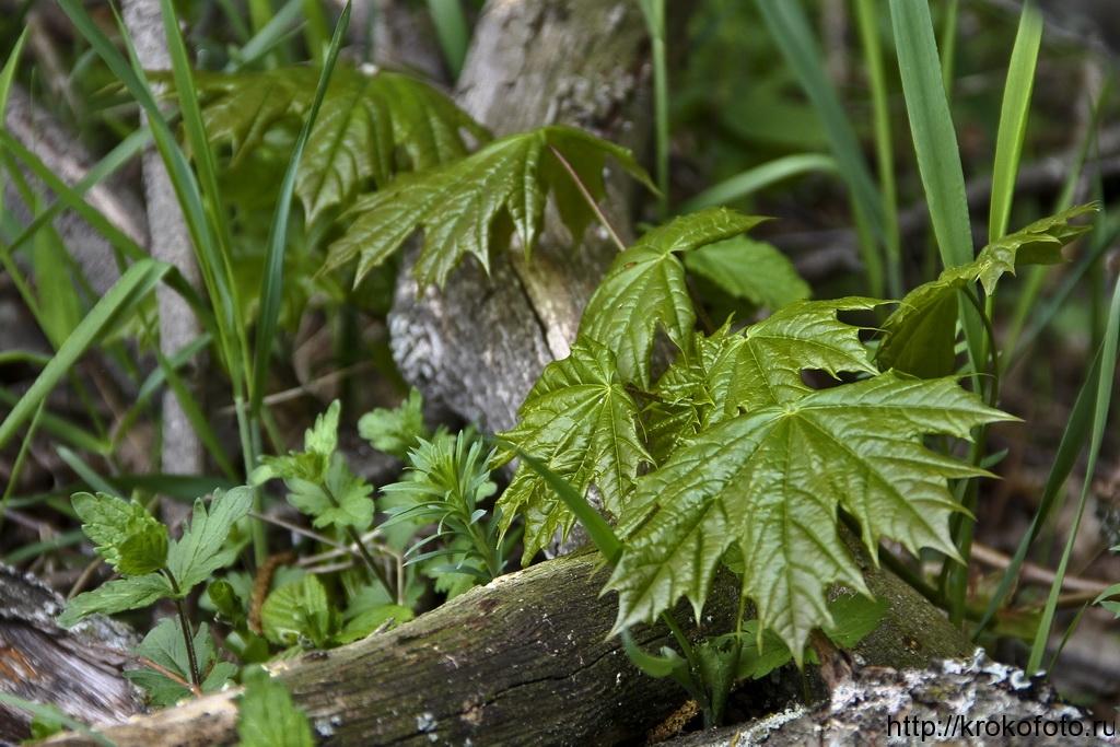 растения 42
