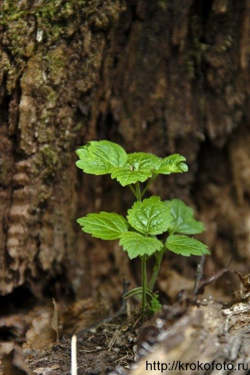 растения 44