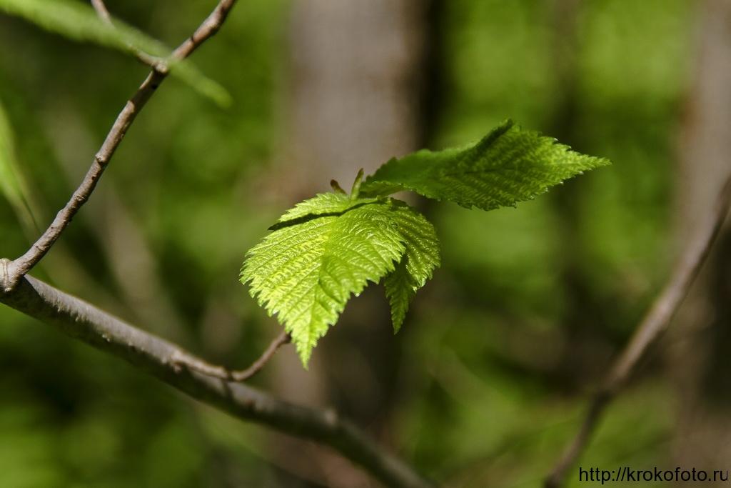 растения 46
