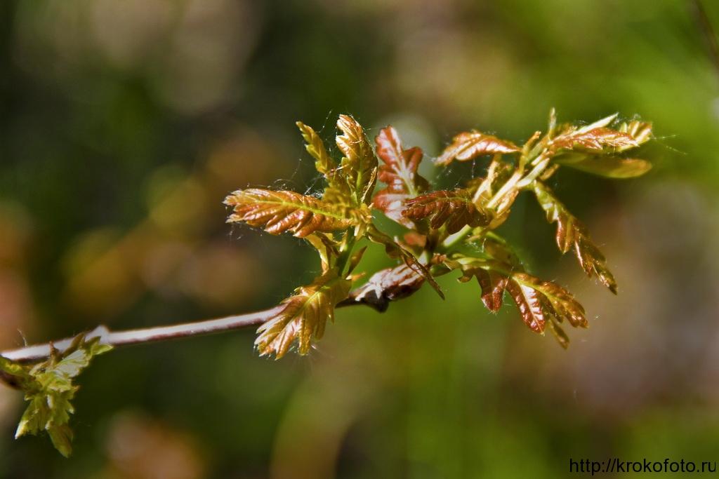 растения 49