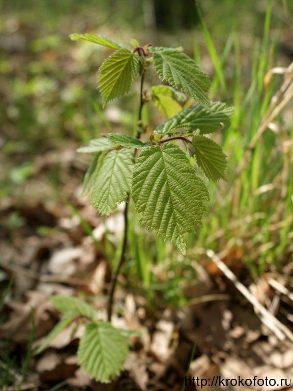 растения 148