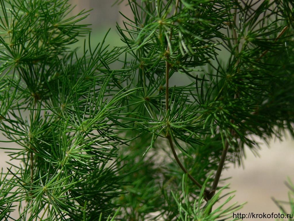 растения 58