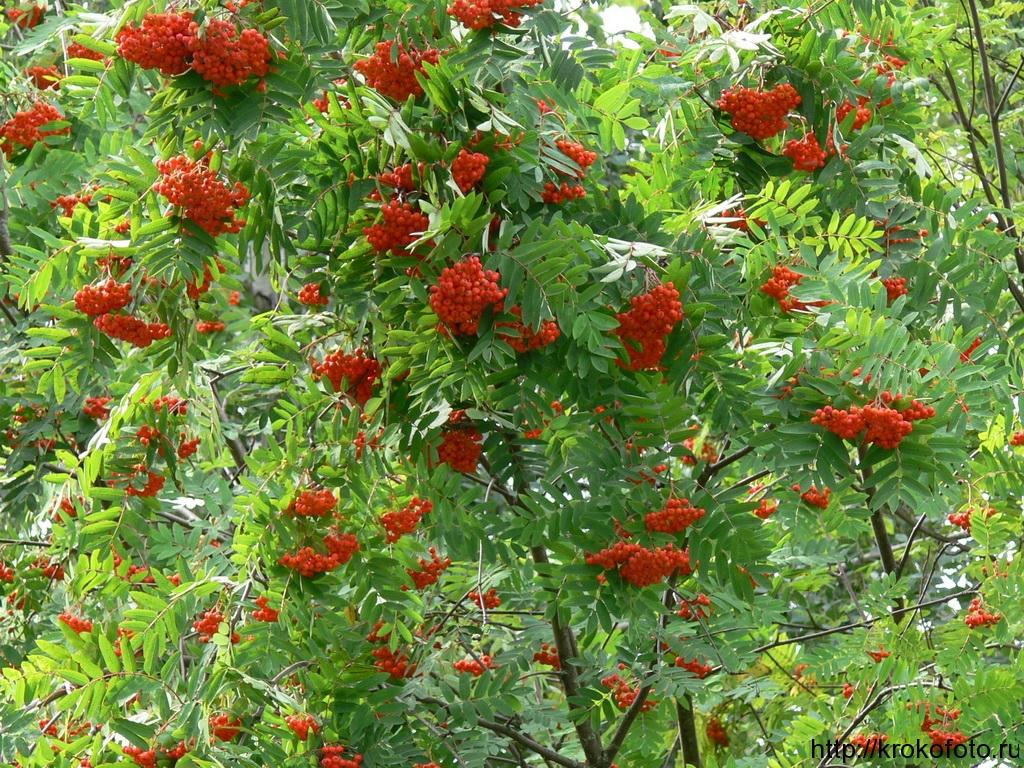 растения 150