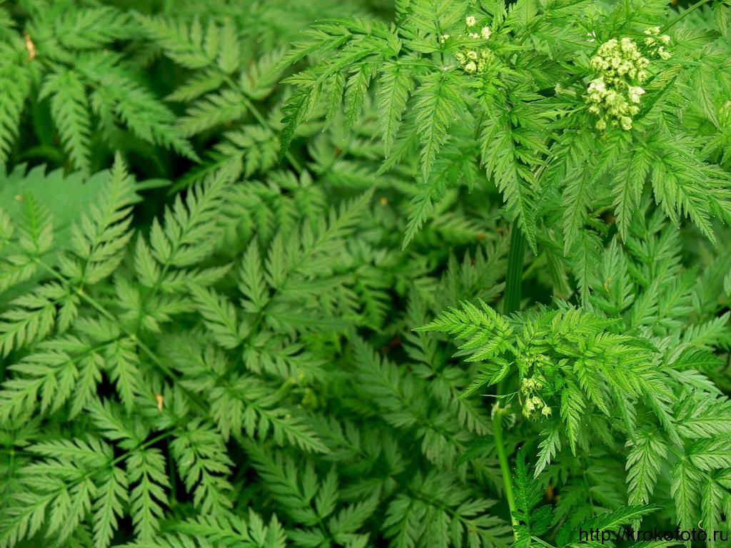 растения 61