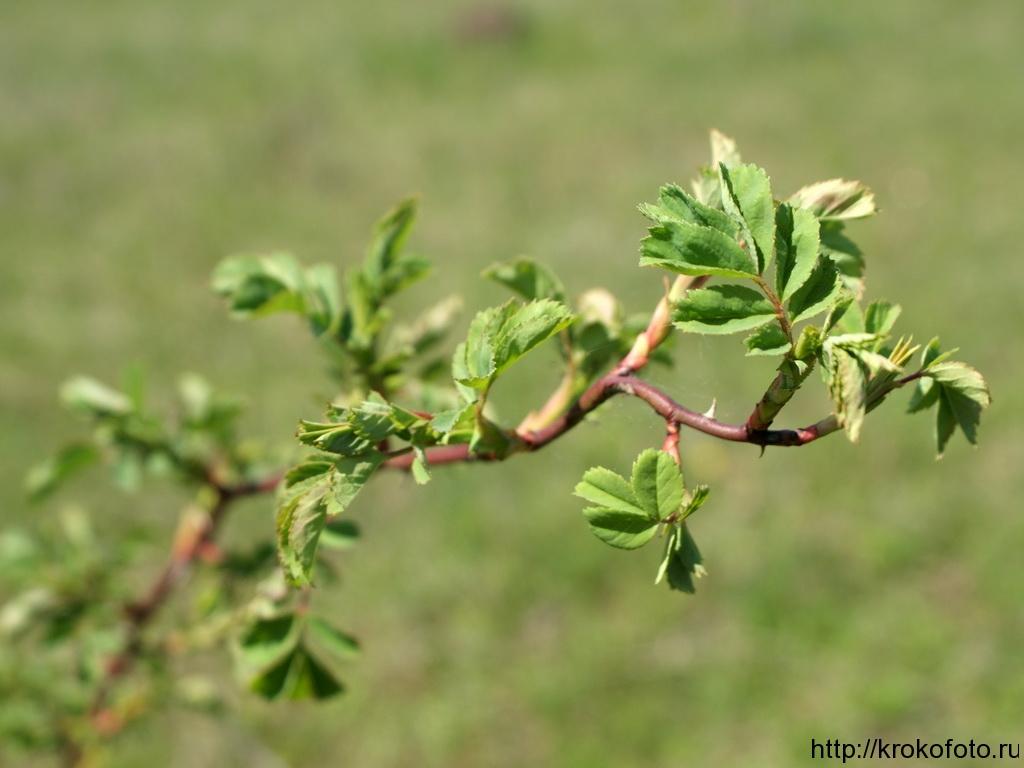 растения 66