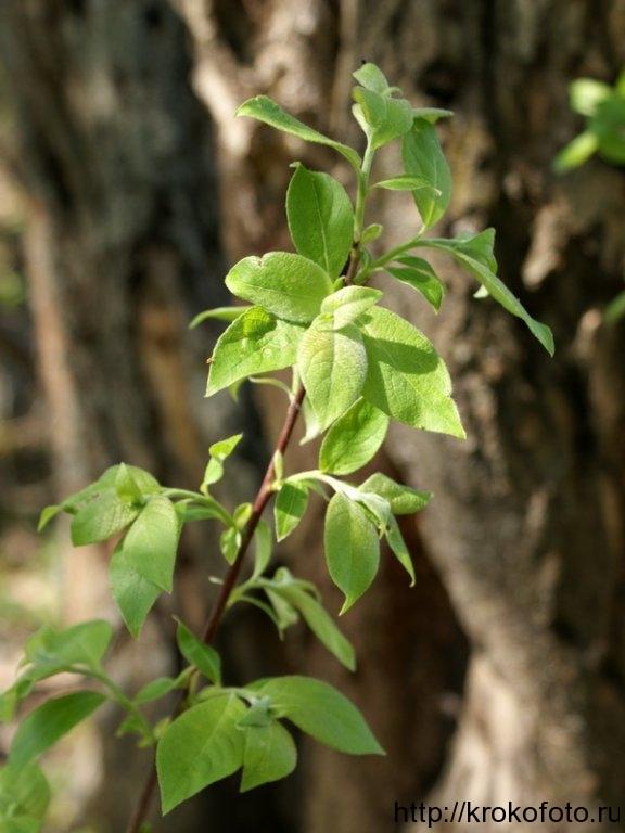 растения 155