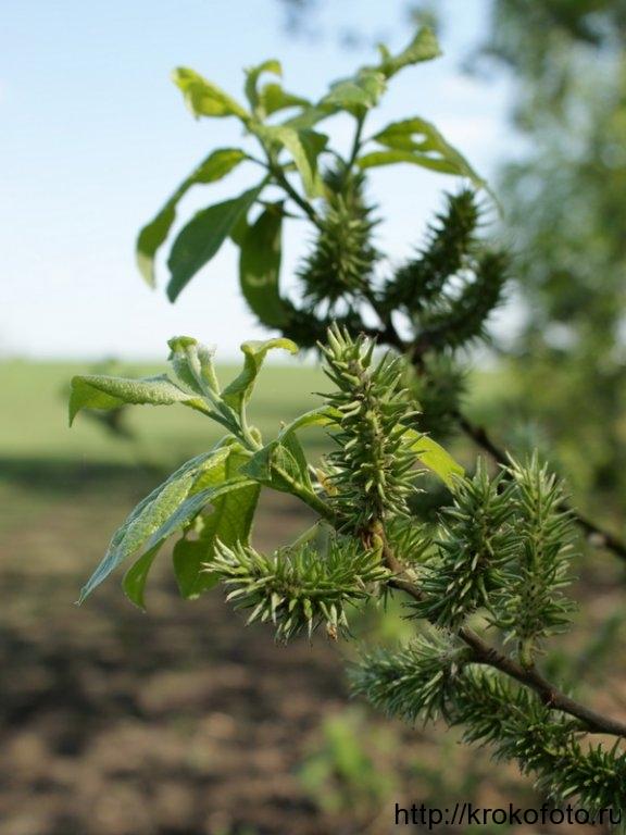 растения 73