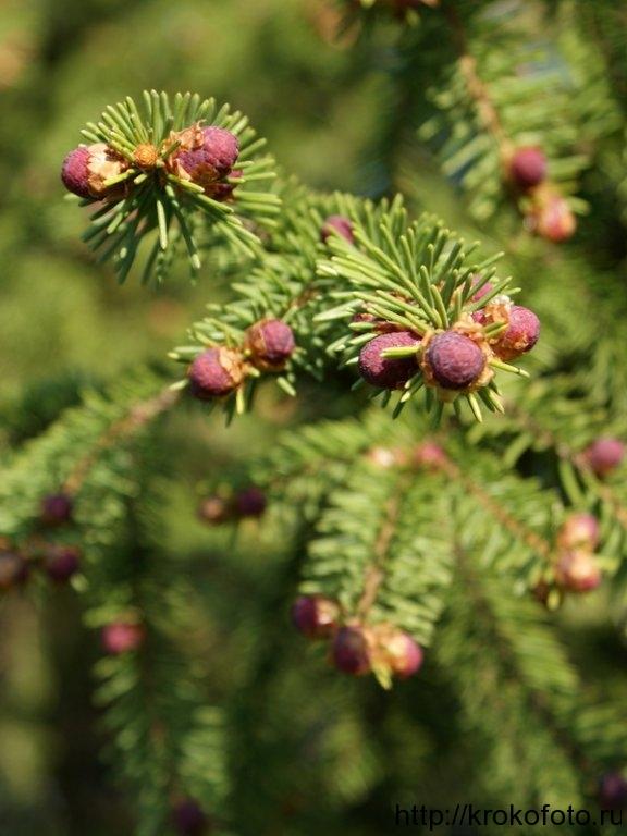 растения 75