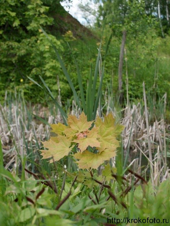 растения 78