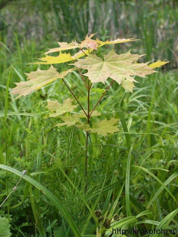 растения 158