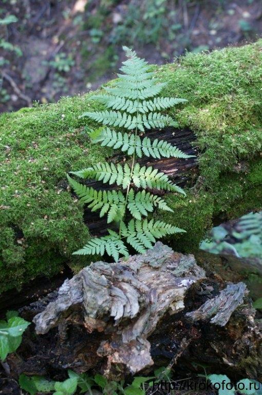 растения 79