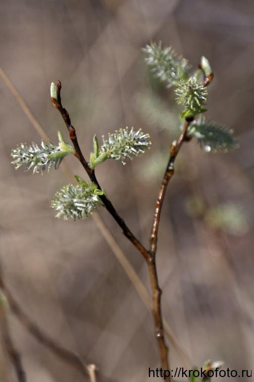 растения 92