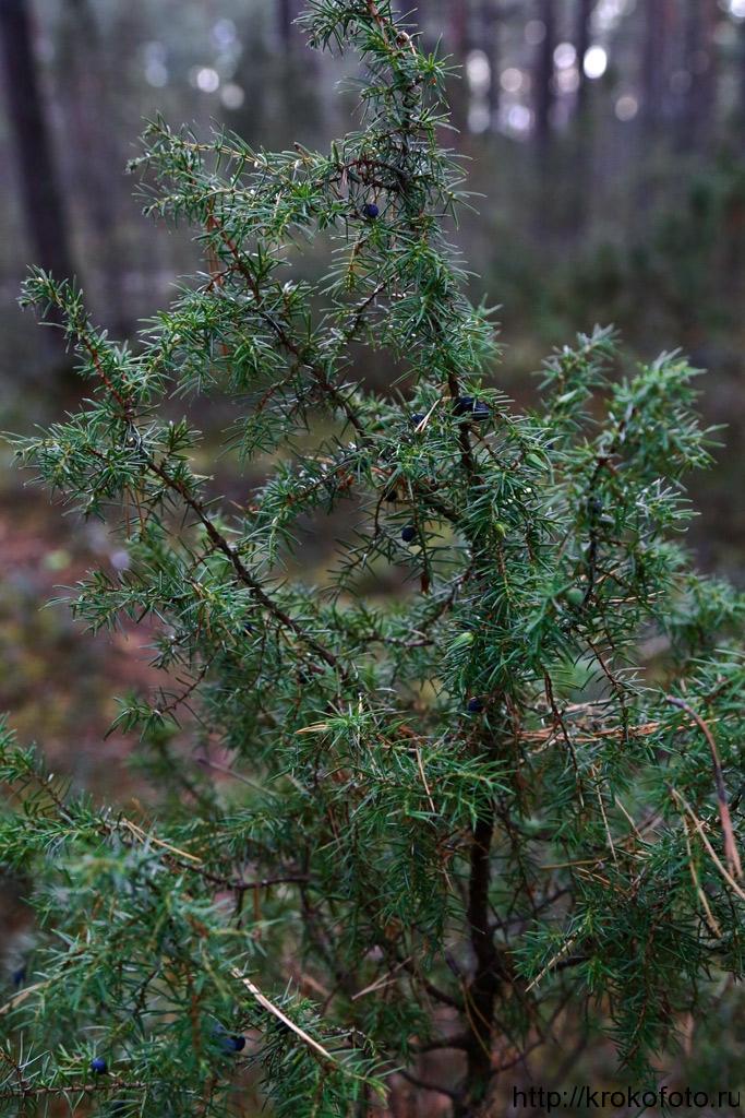 растения 113