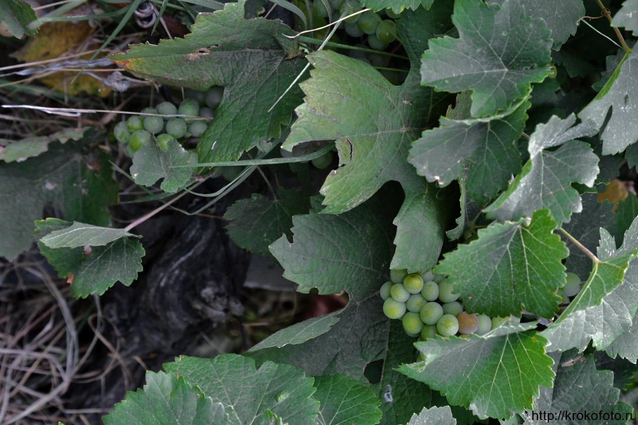 растения 104