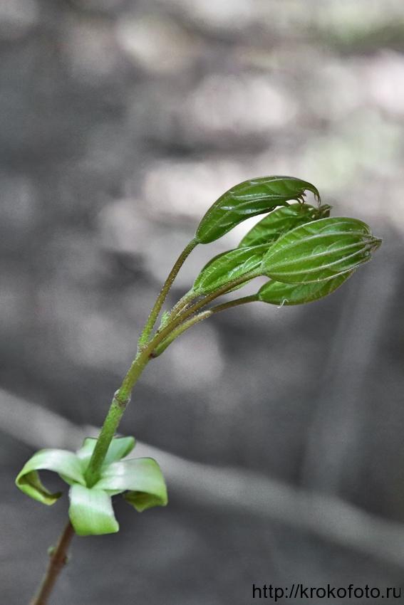 растения 97