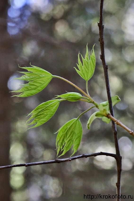 растения 98