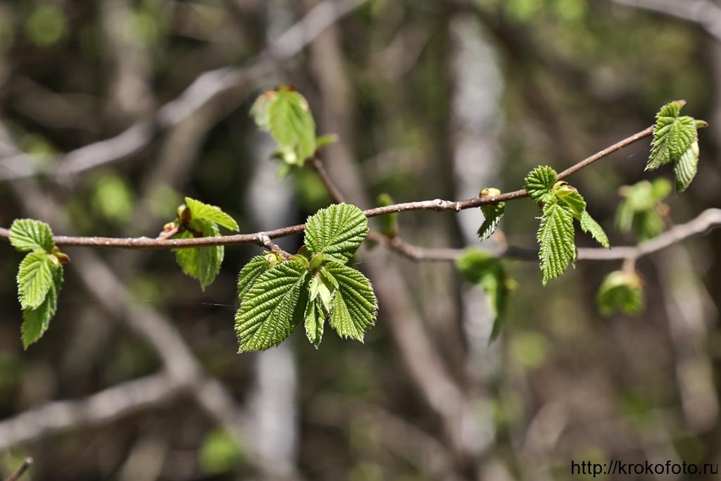 растения 99