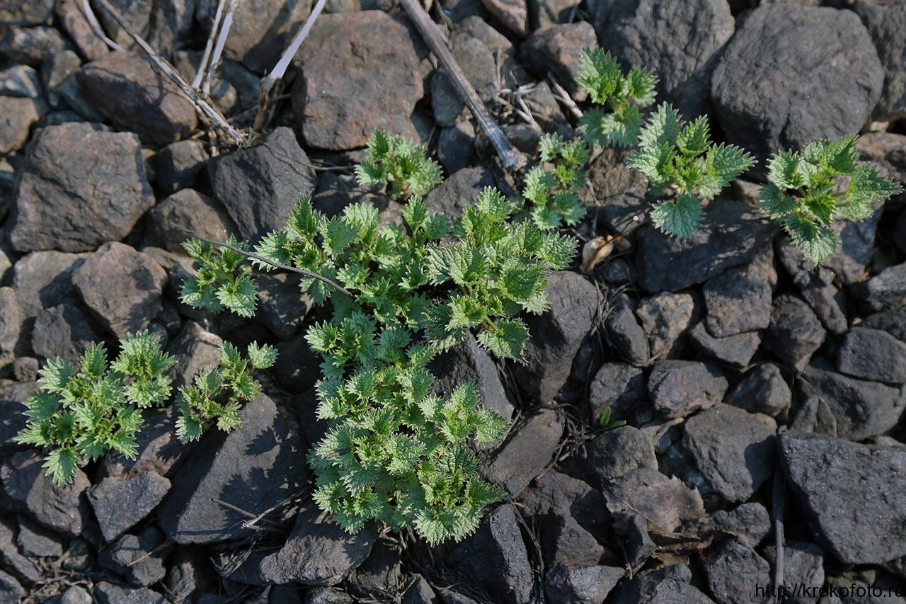растения 119