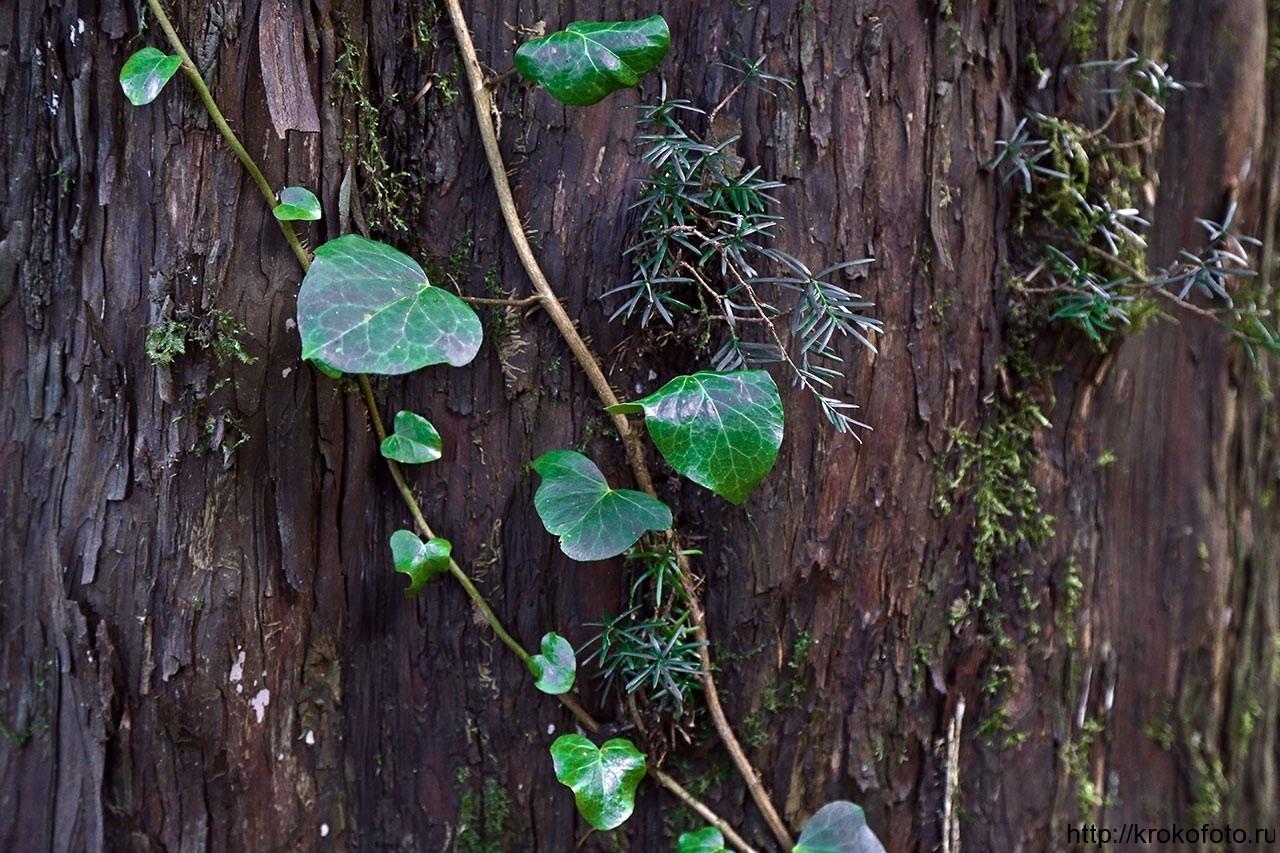 растения 122