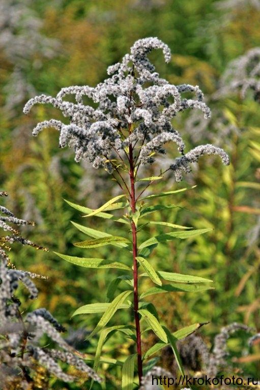 растения 88