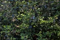 растения 102