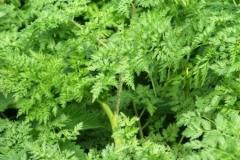 растения 139