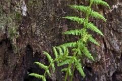 растения 45