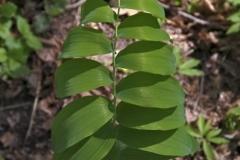 растения 48