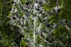 растения 50