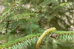 растения 51