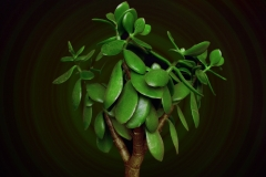 растения 56