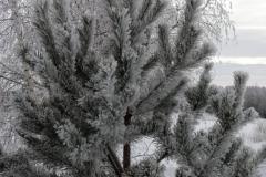растения 156