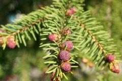 растения 157